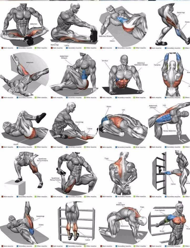 Разминка перед тренировкой, комплекс упражнений для разминки