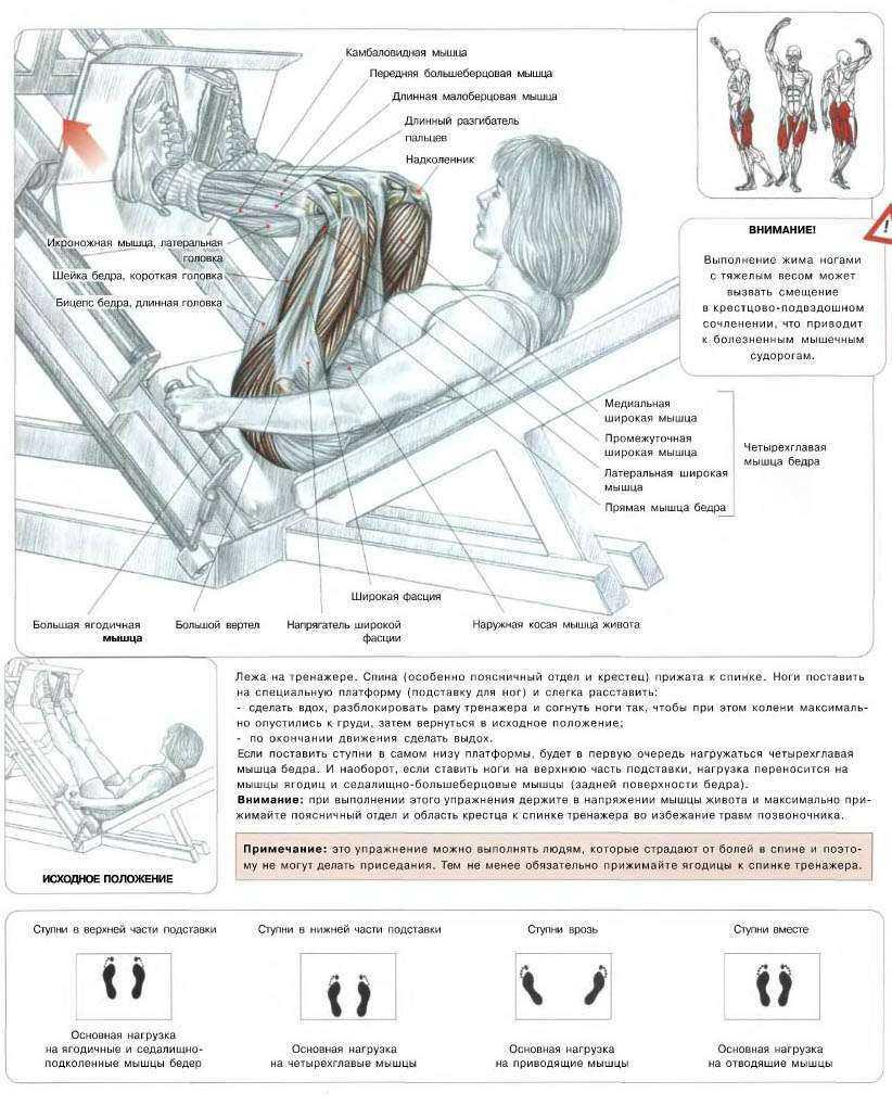 Постановка ног при жиме ногами в тренажере: варианты жима ногами с широкой, узкой, высокой, низкой и средней постановкой ног
