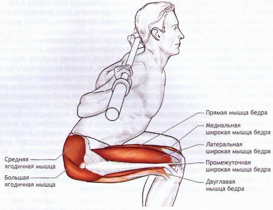Приседания на 1 ноге: болят ноги после приседаний