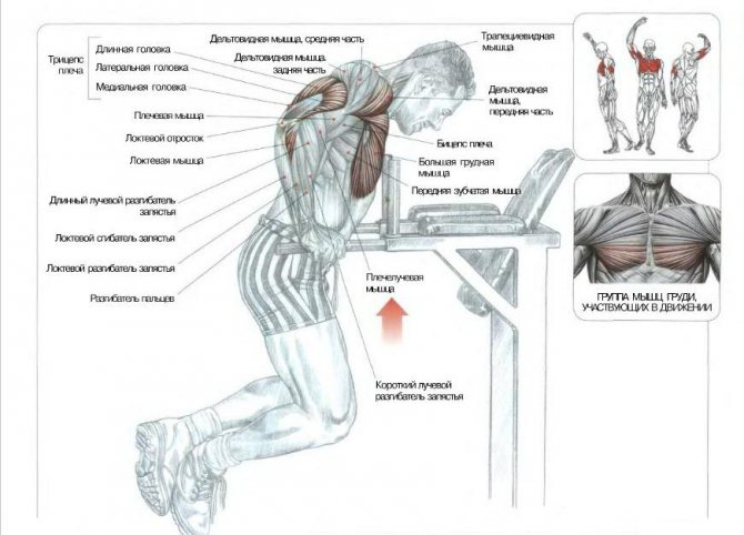 Алмазные отжимания: какие мышцы работают, техника выполнения