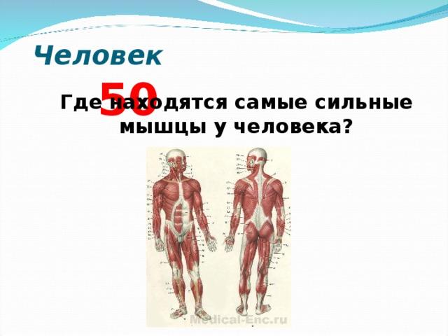Самая сильная мышца у человека