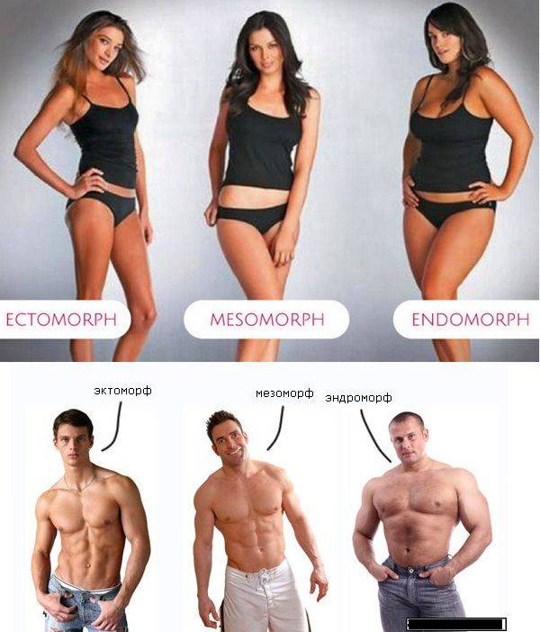 Типы телосложения мужчин: эктоморф, мезоморф и эндоморф