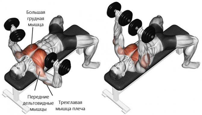 Жим гантелей лежа на полу: техника выполнения, какие мышцы работают