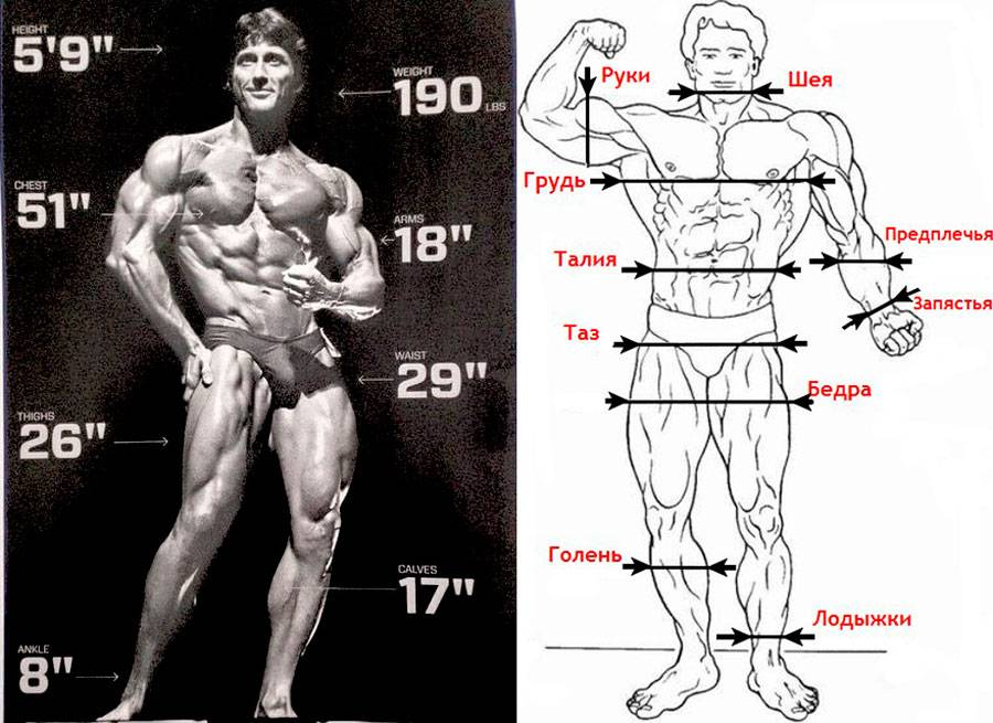 Идеальные пропорции в бодибилдинге, таблица пропорций для мужчин