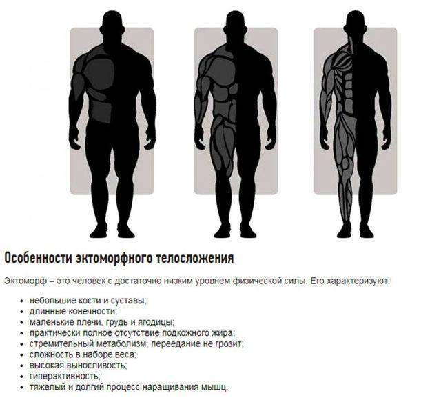 Как эктоморфу набрать мышечную массу в домашних условиях?