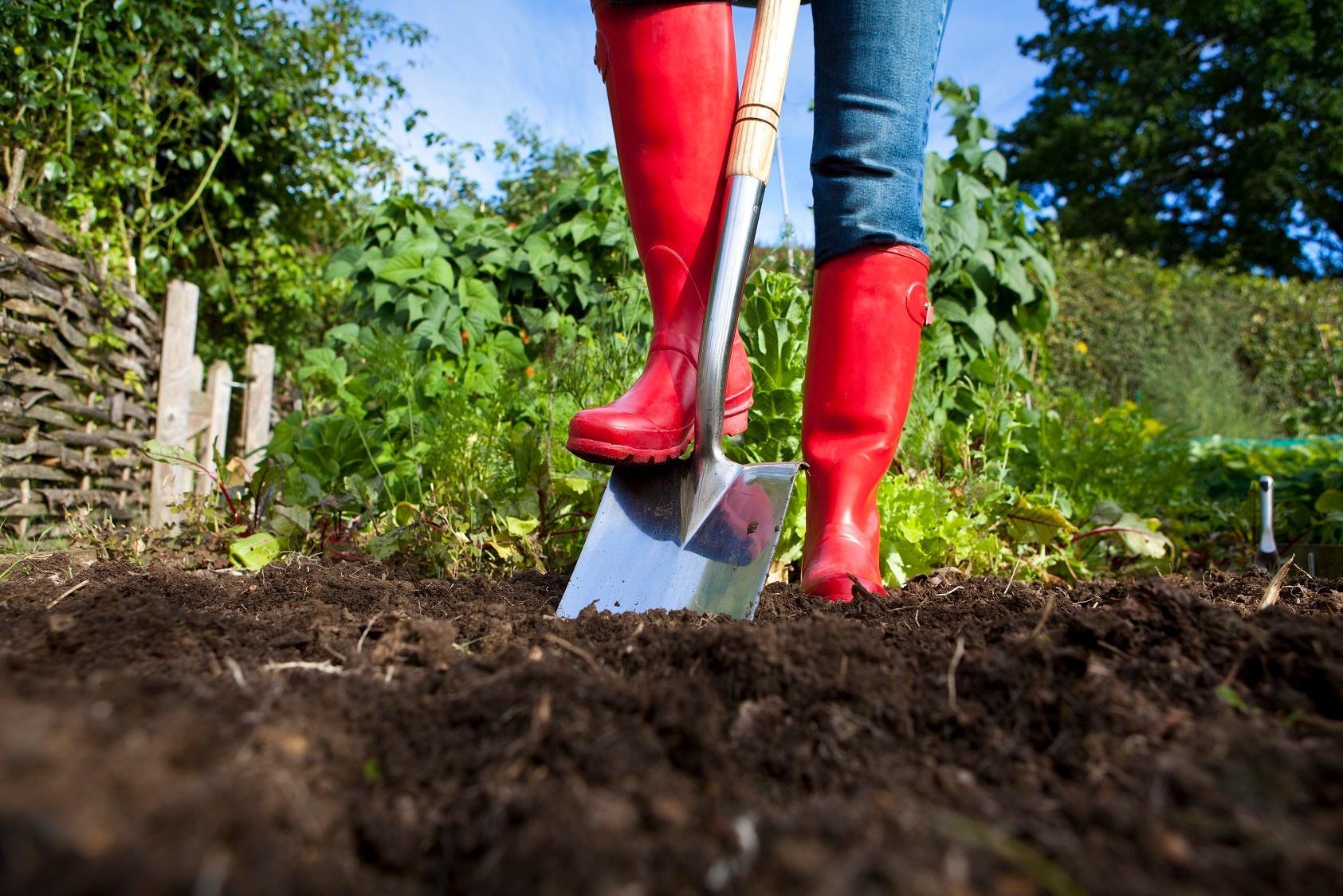 8 инструментов, которые облегчают дачный труд   полезно (огород.ru)