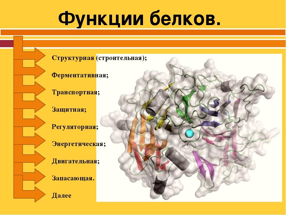 Функции белков в клетке: что является основными ферментативными функциями рибосомы или углеводов в организме и таблица об этом