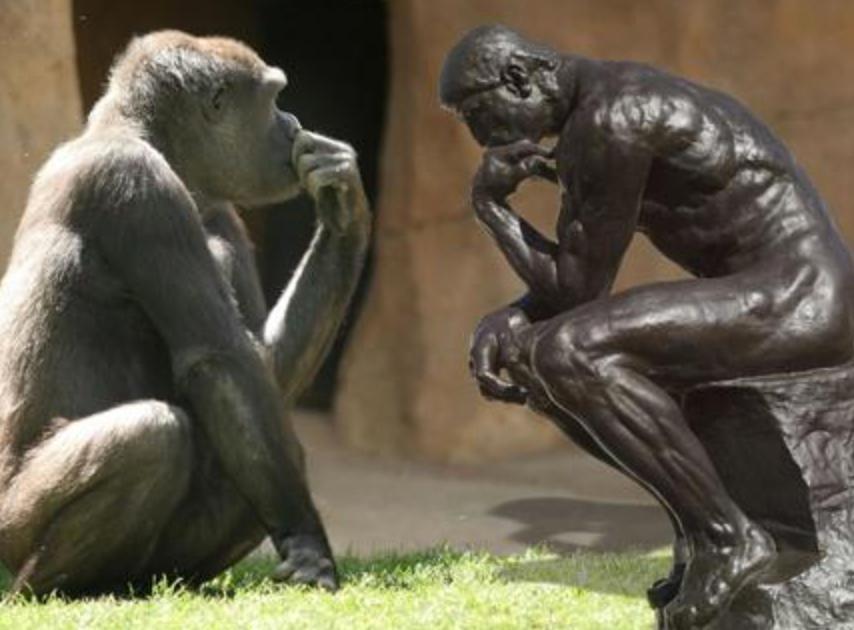 Инстинкт или разум? как объяснить «человеческие» поступки животных
