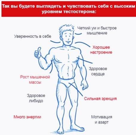 Продукты повышающие тестостерон - список самых популярных