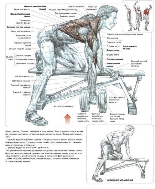 Как накачать спину: советы для развития мощных мышц спины