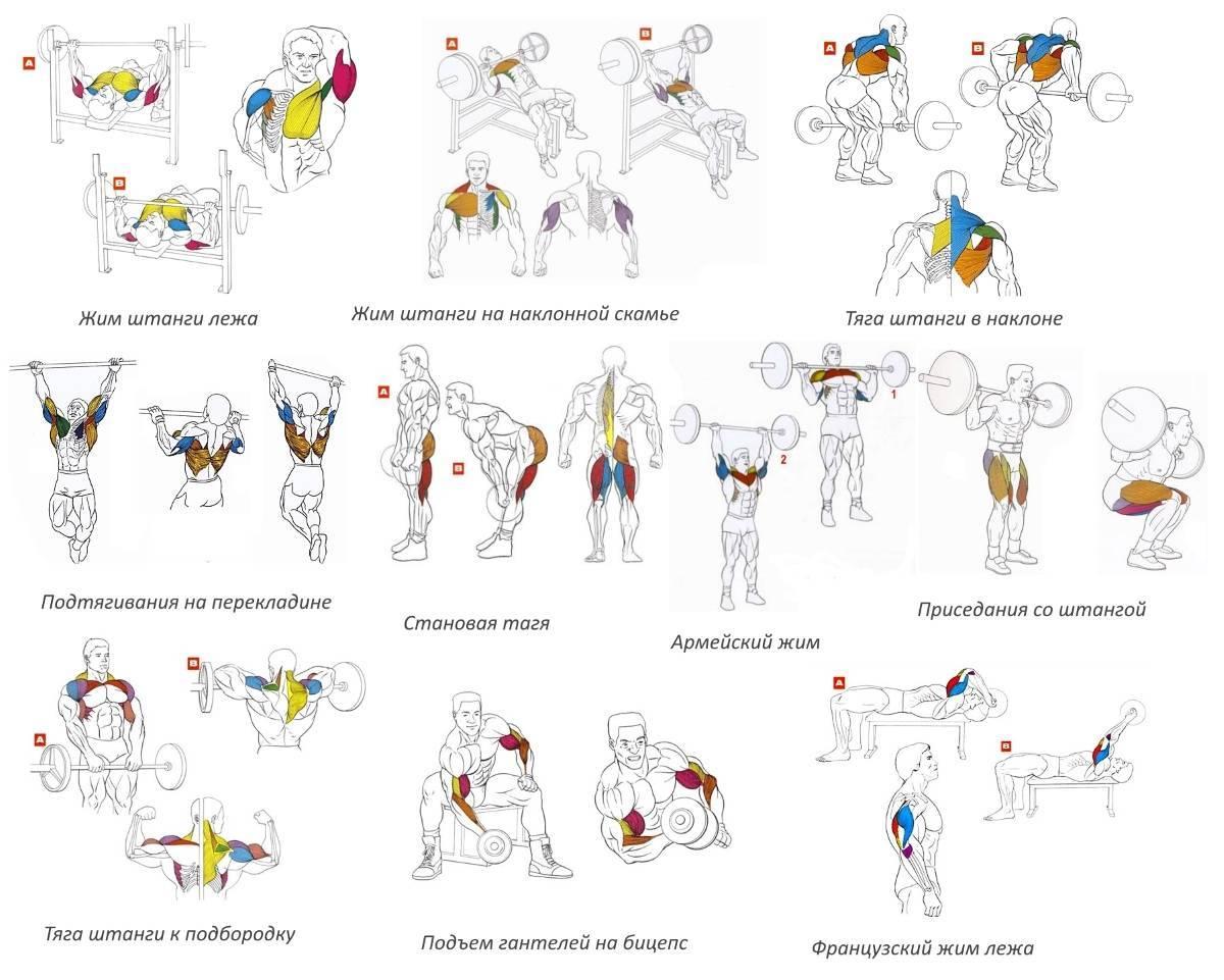 Базовые упражнения со штангой —что дают и почему их важно делать?