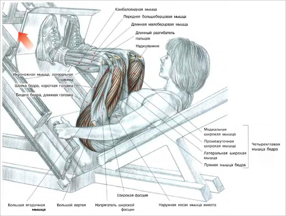 Жим ногами в тренажере — sportfito — сайт о спорте и здоровом образе жизни