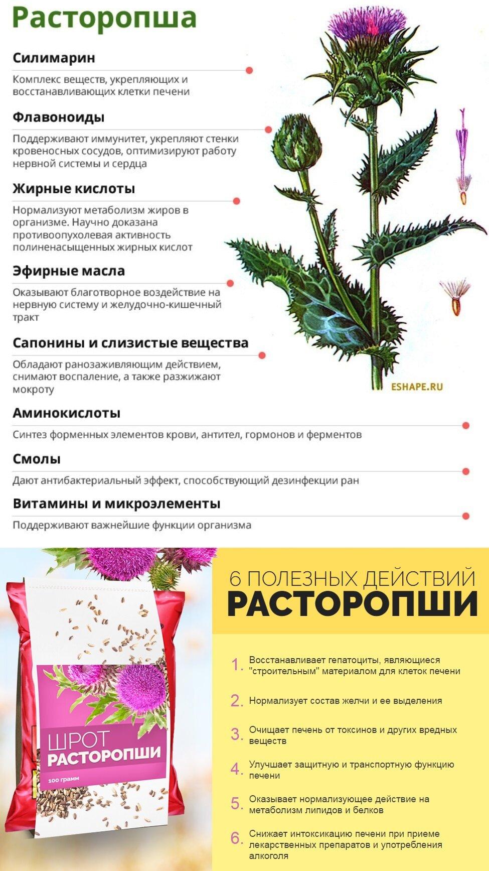 Трава расторопша: полезные свойства и противопоказания, применение в кулинарии и косметологии