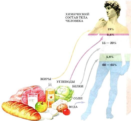 Как углеводы влияют на ожирение