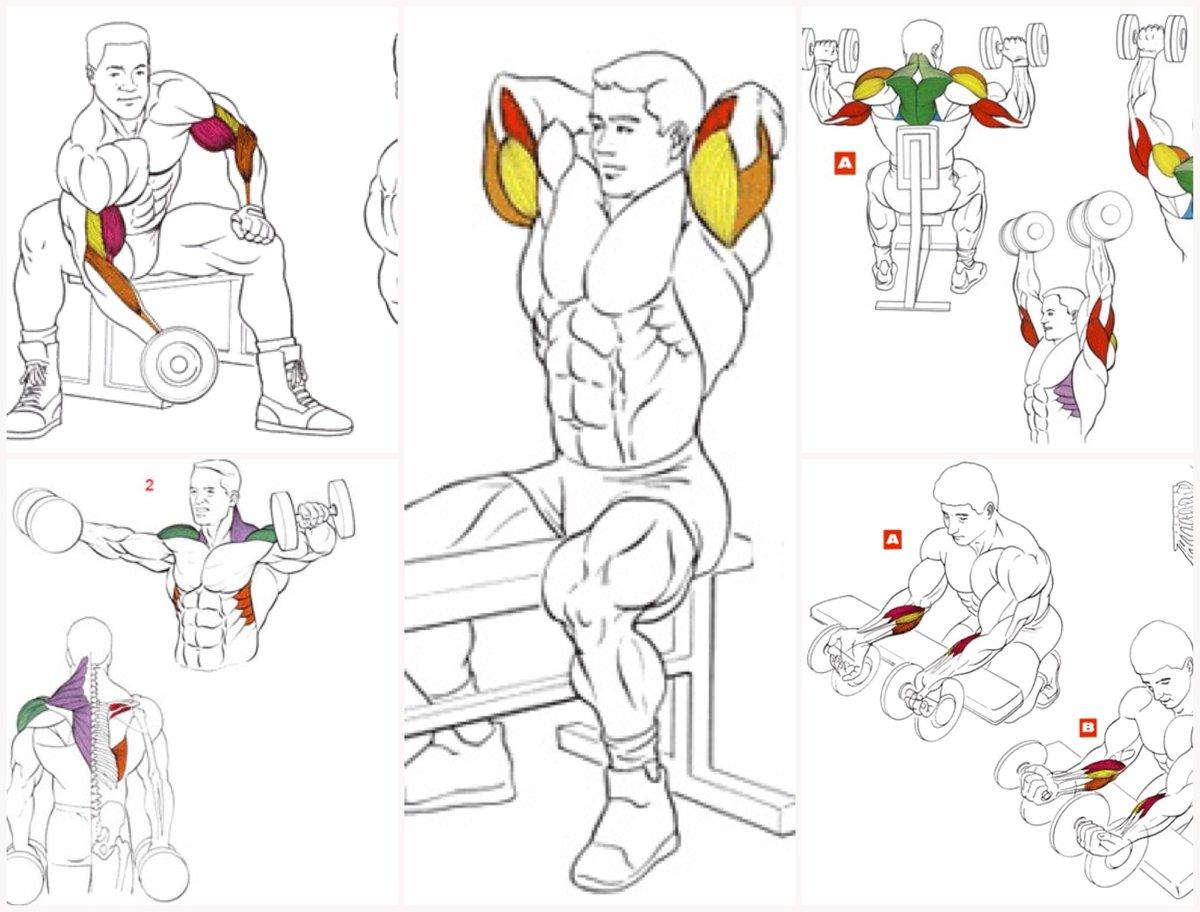 Как накачать плечи: 4 программы тренировок