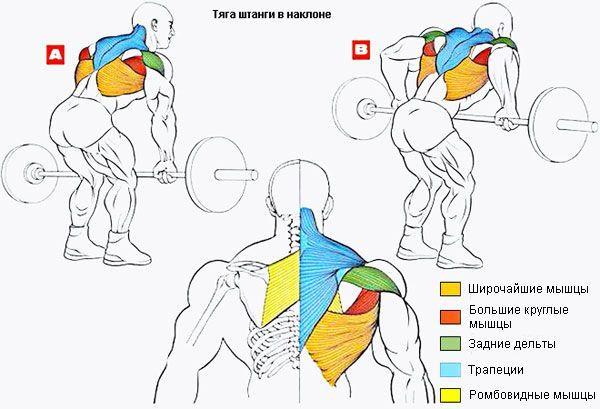 Тяга штанги за спиной стоя: техника выполнения упражнения