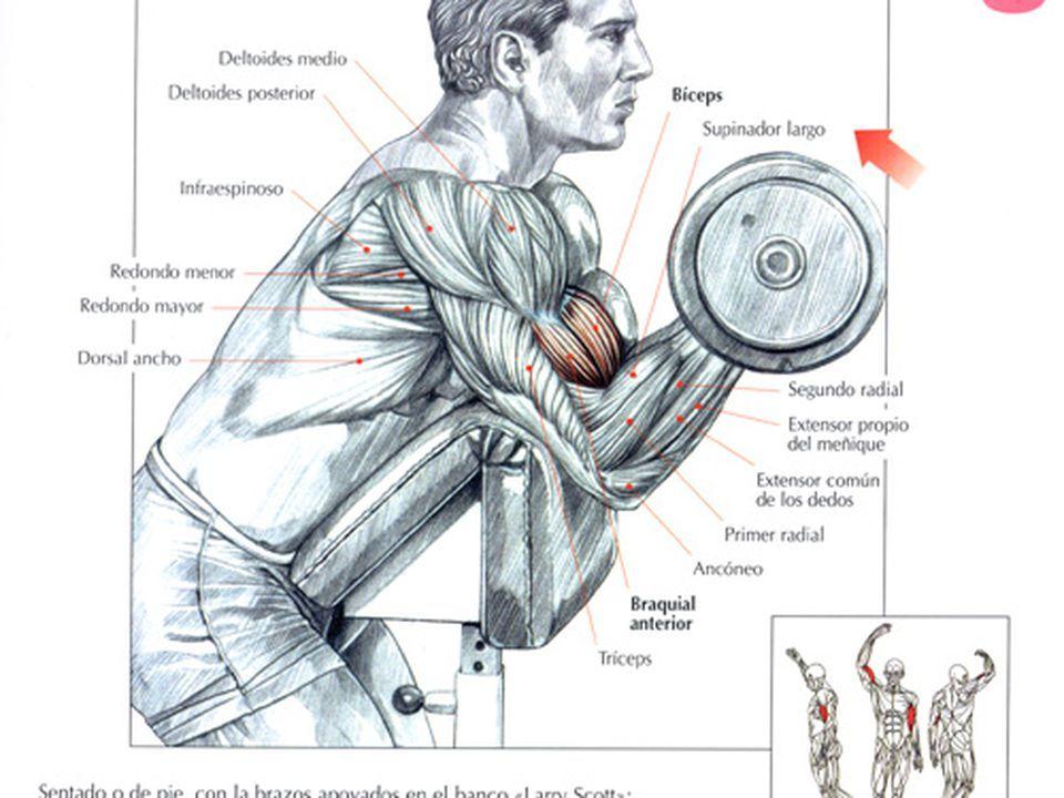 Упражнение подъем штанги на бицепс стоя