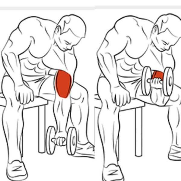 Базовые упражнения на трицепс в тренажерном зале и дома