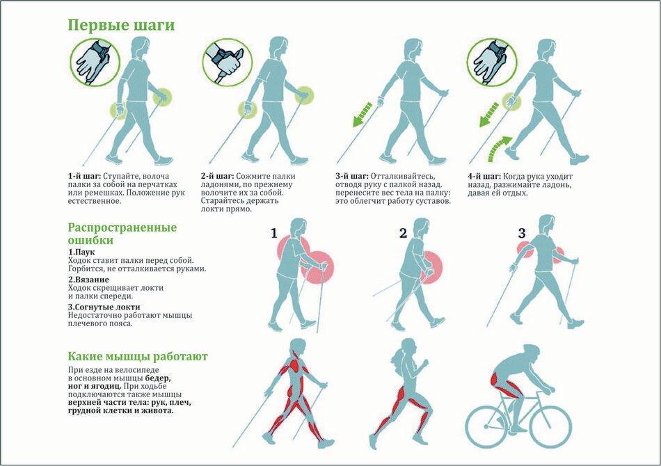 Cкандинавская ходьба с палками: польза и вред для пожилых людей