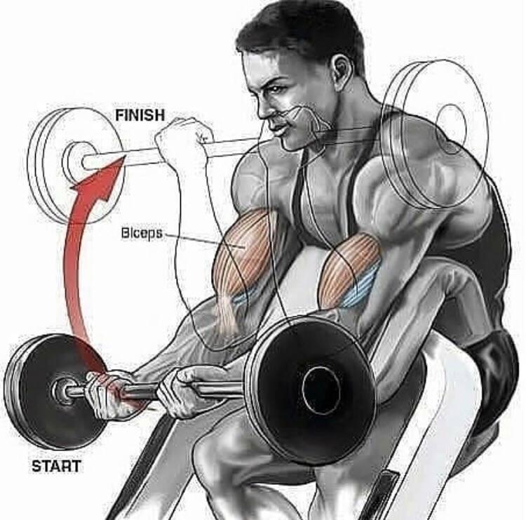 10 лучших упражнений для тренировки бицепсов