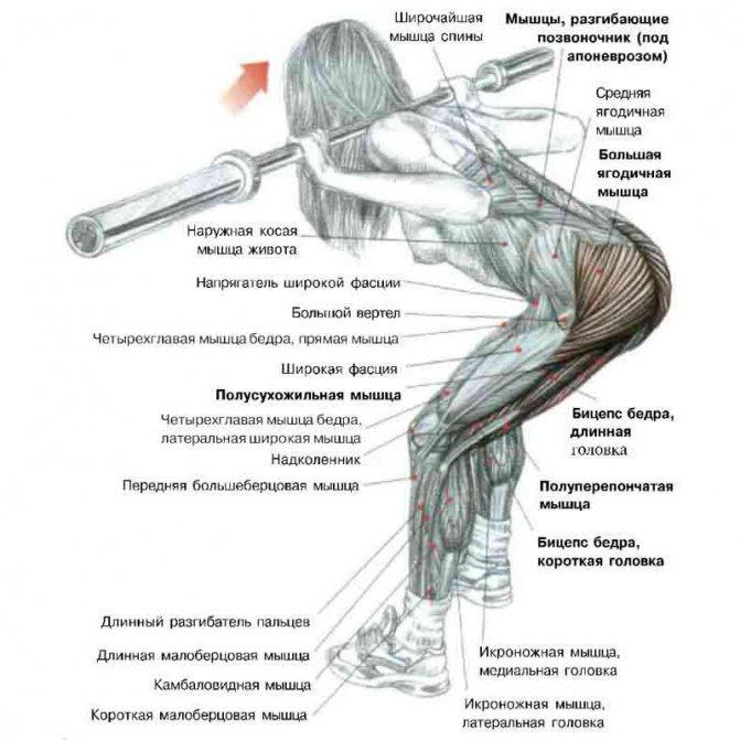 Упражнения на среднюю ягодичную мышцу для поднятия верха ягодиц