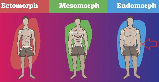 Питание эндоморфа для похудения и набора мышечной массы