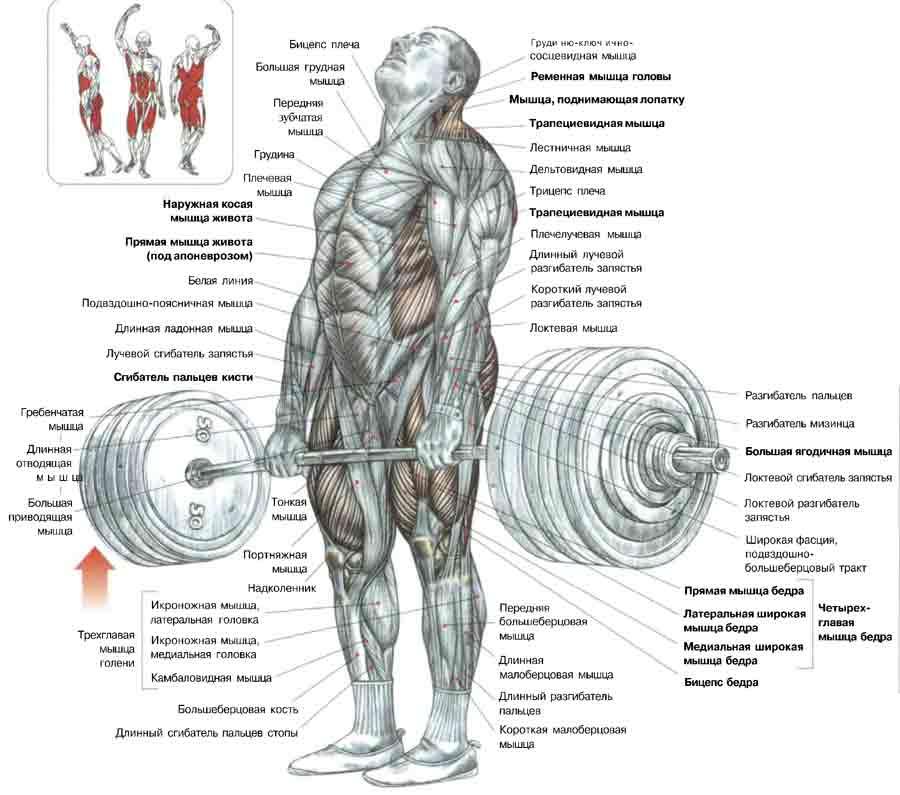 Румынская становая тяга: техника выполнения упражнения