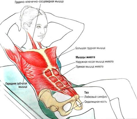 Упражнения на косые мышцы живота для мужчин и женщин: (программа тренировок в домашних условиях и зале)