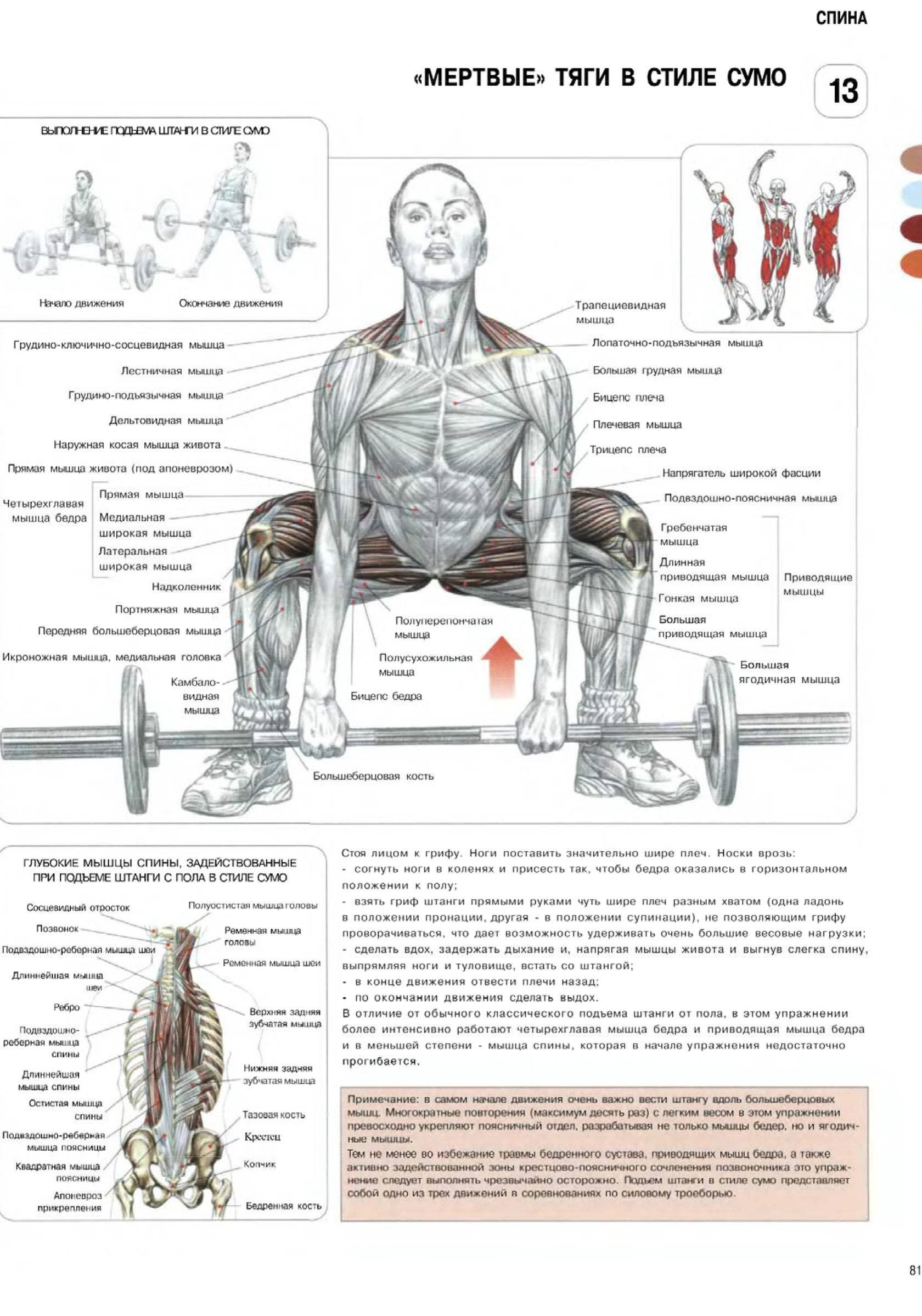 Становая тяга из ямы: техника выполнения, какие мышцы работают