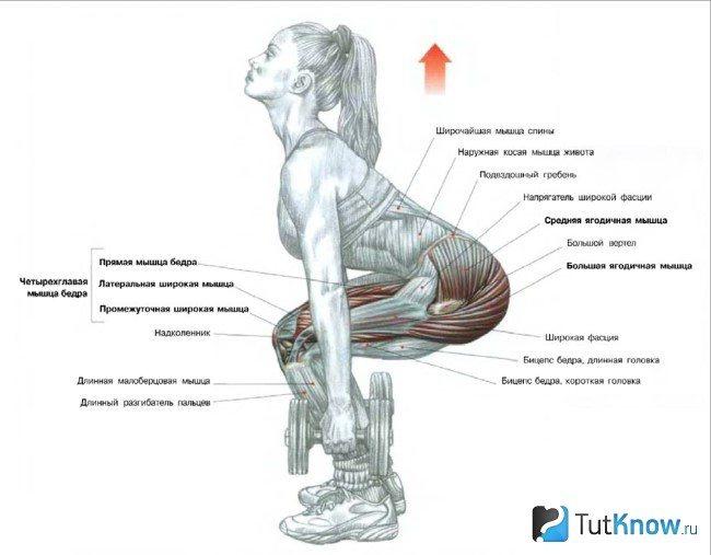 Можно ли накачать мышцы маленькими весами