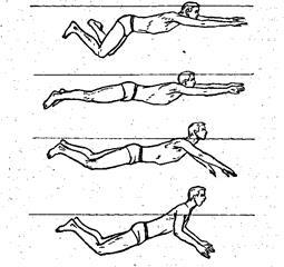 Техника плавания стилем брасс: детальное описание и типичные ошибки