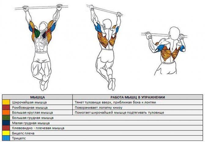 Программа тренировок на турнике и брусьях: базовые упражнения - tony.ru