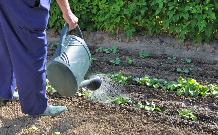 Как грамотно организовать и распланировать огород на дачном участке