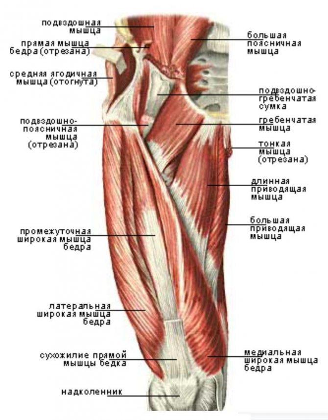 Упражнения для внутренней поверхности бедра: топ-10