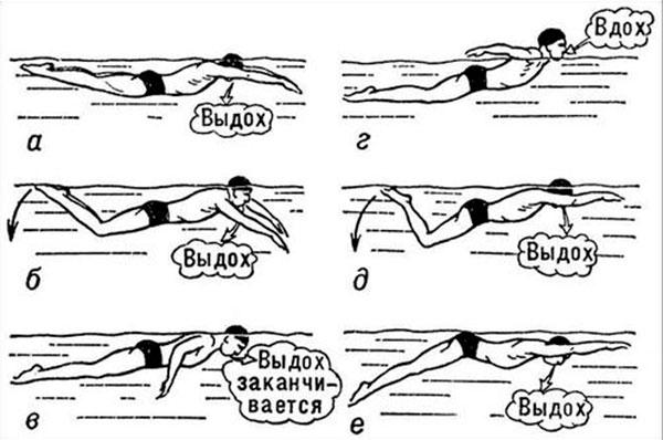 Стиль плавания брасс: техника, как правильно плавать