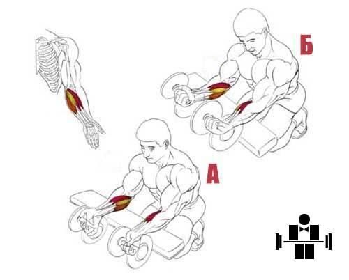 Как укрепить запястья рук: лучшие упражнения.  | бомба тело