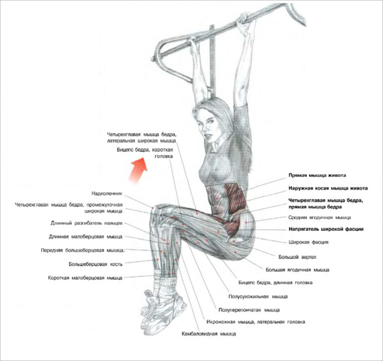 Как качать ноги: самый эффективный тренинг ног