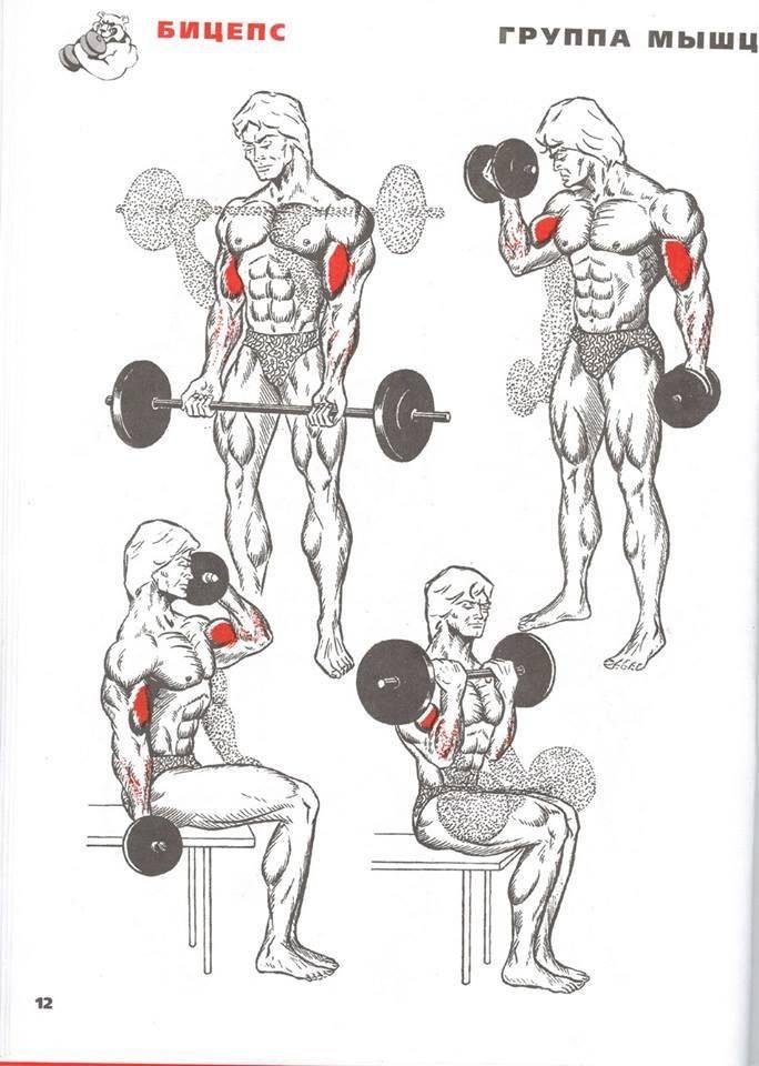 Как растут мышцы: сложные процессы простыми словами