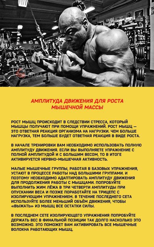 Мышечная масса: норма в процентах, способы расчета, важность контроля - tony.ru