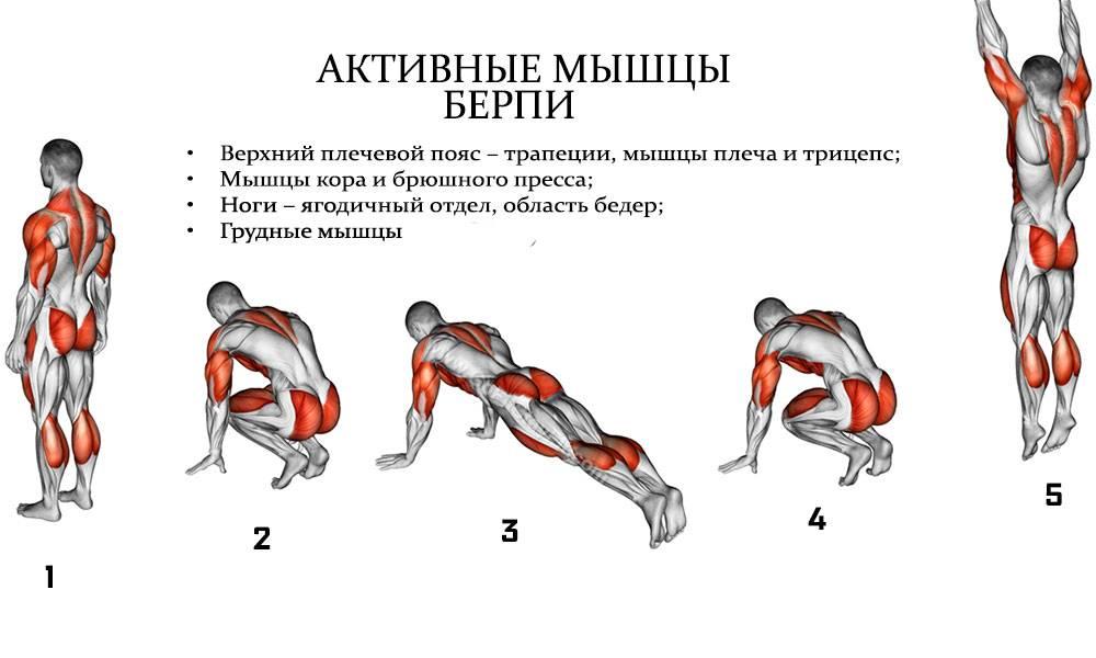 Отжимания от пола: какие мышцы работают?