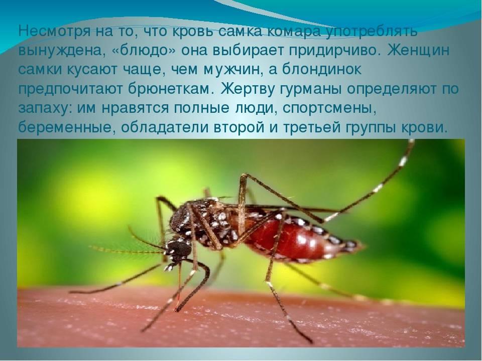Кто тут самый вкусный? людей с какой группой крови комары «любят» больше | самое интересное