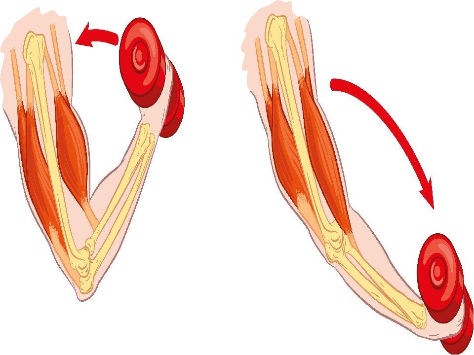 Почему ваши мышцы не растут?!