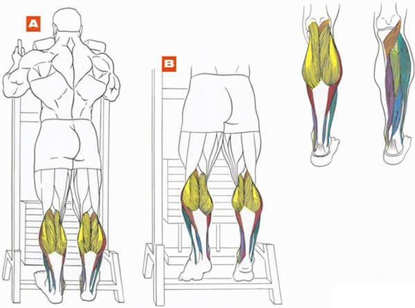 Как накачать ноги в домашних условиях мужчине и девушке быстро