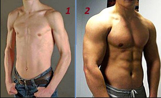 Почему толстому нельзя качаться? дисбаланс гормонов