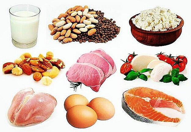 Сколько белка усваивается за один приём пищи?