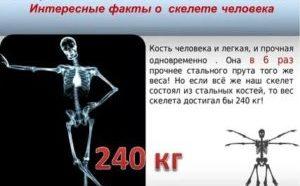Кости у всех одинаковые