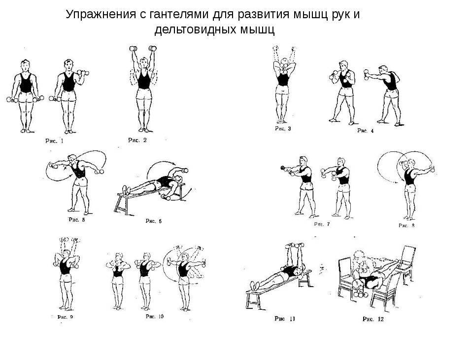 Упражнения с гантелями дома
