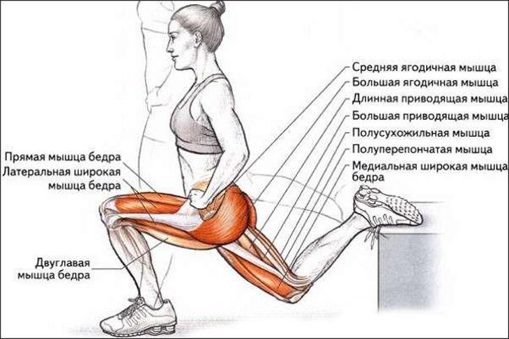 """Приседания плие (сумо): 5 вариантов выполнения упражнения, техника выполнения, польза (приседание плие с гантелей и штангой) — """"fito"""" — красота и здоровье"""