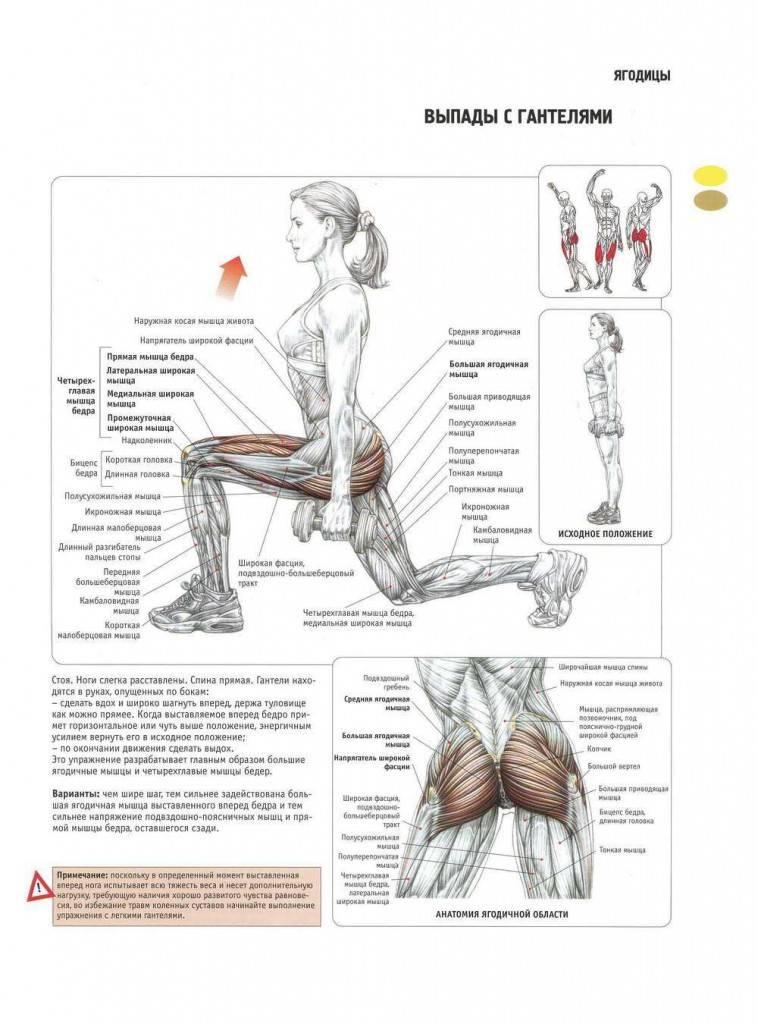 Упражнения для ягодиц в домашних условиях и в тренажерном зале (программа тренировок)