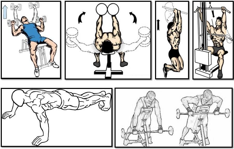 Тренировка упражнений: № 3 (подтягивание на перекладине), № 4 (поднимание ног к перекладине), комплексов вольных упражнений № 1 и № 2. комплексная тренировка на тренажерах и многопролетных гимнастических снарядах. - планконспект